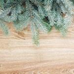 Fir tree border — Stock Photo #53167749