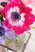 Anémona flor — Foto de Stock