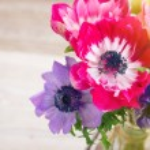 Anemone flowers — Stock Photo #53970321