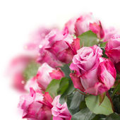 Roze bloemen close-up — Stockfoto