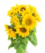 Bouquet of bright sunflowers — Stock Photo