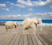 Old pier with elephants — Stock Photo