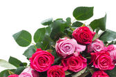 Border of pink  flowers — Stock Photo