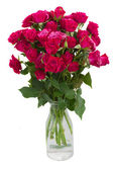 Bunch of  fresh mauve roses — Stock Photo