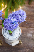 Hyacinths flowers — Stock Photo