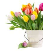 Bouquet of multicolored   tulip flowers in white pot — Stock Photo