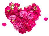 Heart of roses — Stock Photo