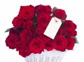 Border of fresh crimson red  garden roses — ストック写真