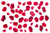 Crimson  rose petals — Stock Photo