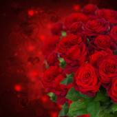 Scarlet roses  on dark background — Stock Photo
