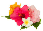 Colorful hibiscus flowers — Stock Photo