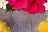Colorful hibiscus flowers with tag — Stock Photo