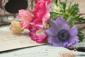 Quill pen and antique letters with anemone flowers — Stok fotoğraf