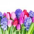 Blue hyacinth and  tulips — Stock Photo #66224795