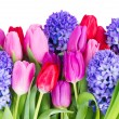 Blue hyacinth and  tulips — Stock Photo #67435305