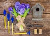 Blue hyacinth and gardening  set up — Stock Photo
