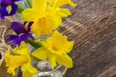 Easter daffodil — Stock Photo