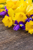 Easter daffodils and irise — Stock Photo
