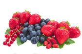 新鮮な果実の山 — ストック写真