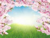 Blooming tree brunches and  green grass — Foto Stock