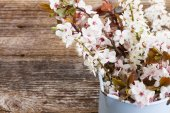 Twigs with cherry flowers — Foto Stock