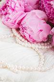 Розовый пион на шнурке — Стоковое фото