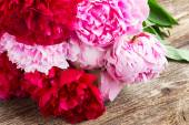 Pink and red  peonies — Stock Photo