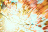 Blur of yellow leaves — Stock Photo