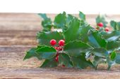 Holly branch — Stock Photo