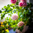 Beautiful roses on the windowsill — Stock Photo #69728919