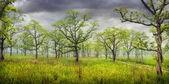 Orman panorama chitwan içinde — Stok fotoğraf