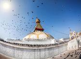 Bodhnath stupa with flying birds — Stock Photo