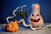 Halloween pumpkins and bat toy — Stock Photo