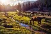Cavalos nas montanhas — Fotografia Stock