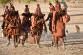 Himba women go back to the village near Opuwo town in Namibia, South Africa — Stock Photo