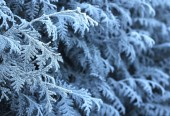 Frosty winter twigs background — Stock Photo
