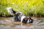 Full purely in the puddle — Stock Photo