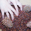 Female hands with cedar nuts and cones — Stock Photo #65028101