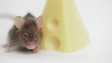 Mouse happiness — Stock Video