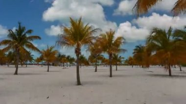 Time Lapse Palm trees at the Sirena beach — Stock Video
