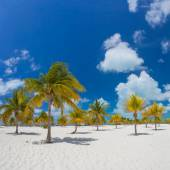 Palm trees on the white sand.  — Stock Photo