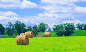 Round hay bales on the green field — Stock Photo