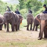 Elephant polo games — Stock Photo #60365101