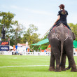 Players at elephant polo games — Stock Photo #60365261