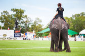 Players at elephant polo games — Stock Photo
