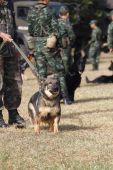 Training Dogs of War — Stock Photo