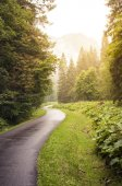 Forest green road — Foto Stock