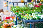 Flowers in shop — Stock Photo