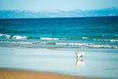 Dog runs on the seashore — Stock Photo
