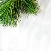 Pine twig — Stock Photo